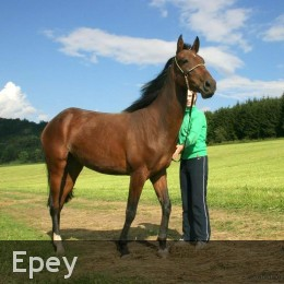 Epey